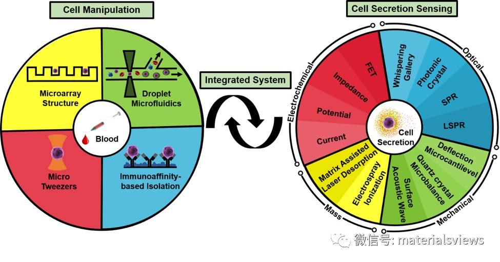 Small Methods:基于微流体系统的单细胞生物检测技术的发展与展望