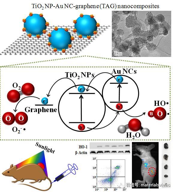 二氧化钛-金团簇-石墨烯异质结构用于增强黑色素瘤无痛光动力学治疗