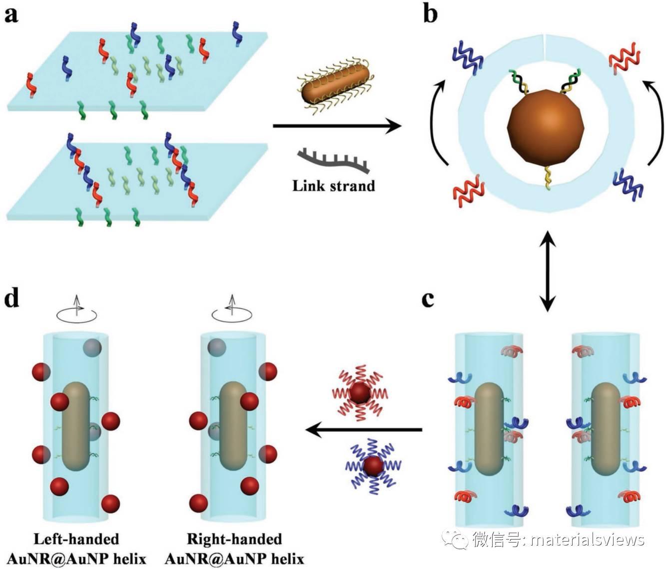 利用DNA折纸术构建金纳米棒@金纳米粒子手性螺旋超结构