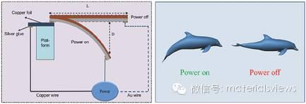 石墨烯智能驱动材料成就机器人游泳健将