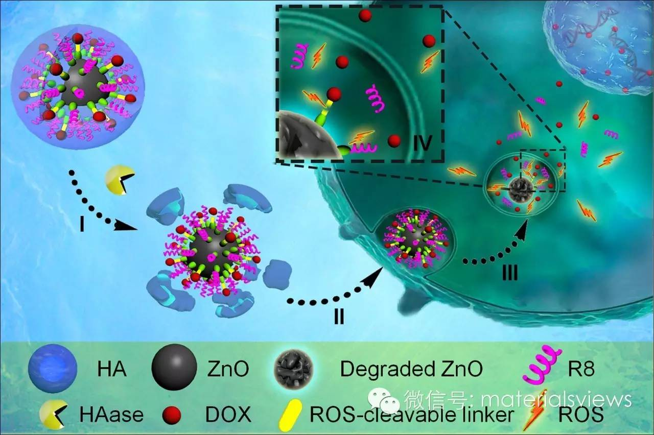 程序化纳米制剂:自我协同的肿瘤靶向治疗