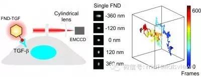 基于荧光纳米金刚石的三维单分子荧光成像