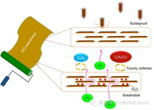 石墨烯渗透膜材料的最新研究进展:结构、传质机制及潜在应用