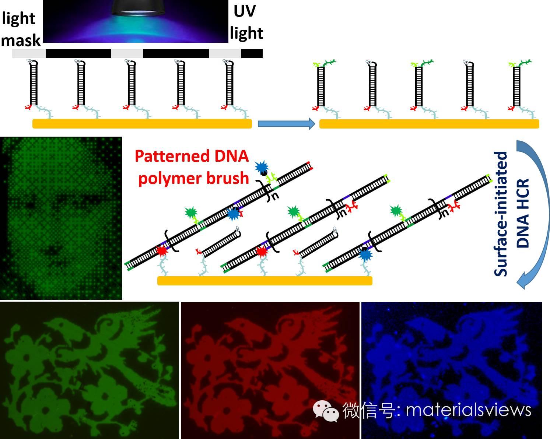 功能化DNA 聚合物刷表面图案化取得新进展