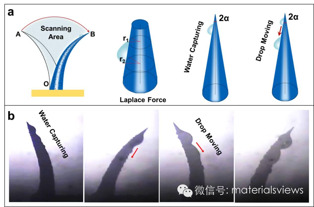 用于雾气收集的磁响应锥形阵列