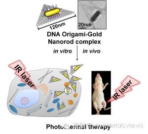 DNA折纸-金棒复合结构用于癌症诊疗
