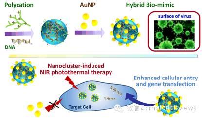 用于基因传递与近红外光热治疗的杂化类病毒纳米构建