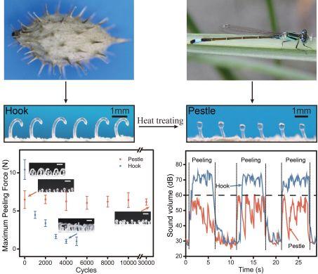 Advanced Science:仿蜻蜓新型杵绳粘扣——解决传统钩绳粘扣(Velcro)耐久性差和产生噪音等问题