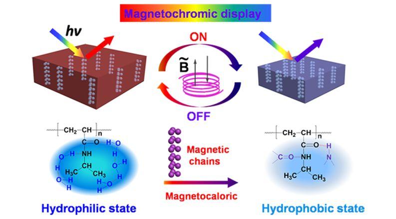 Advanced Optical Materials:磁响应变色光子晶体结构色凝胶