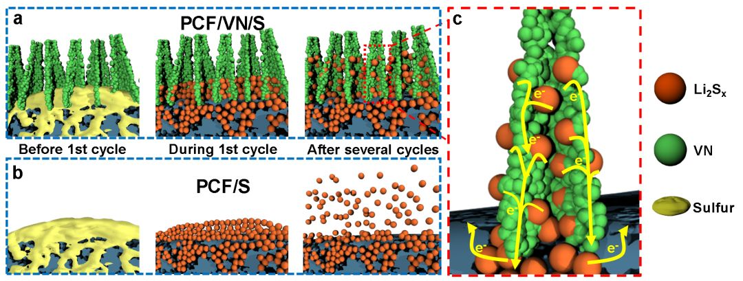 Advanced Functional Materials:多孔碳布结合氮化钒阵列--双重吸附策略助推高性能锂硫电池