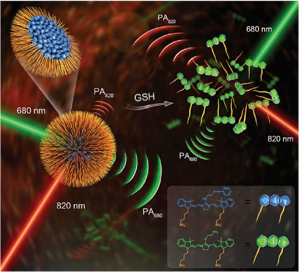 Small:一种基于单组分构筑的纳米探针——活体比率型光声成像新策略