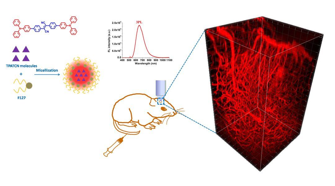 Advanced Healthcare Materials:基于聚集诱导发光纳米探针的三光子荧光显微术实现活体鼠脑深层血管成像