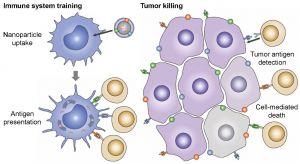 Advanced Materials:癌细胞膜包裹的纳米颗粒——癌症疫苗领域的前沿纳米仿生技术