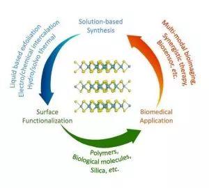 Small Methods:过渡金属二硫化物在生物医学应用中的设计,合成及表面修饰方法的最新综述
