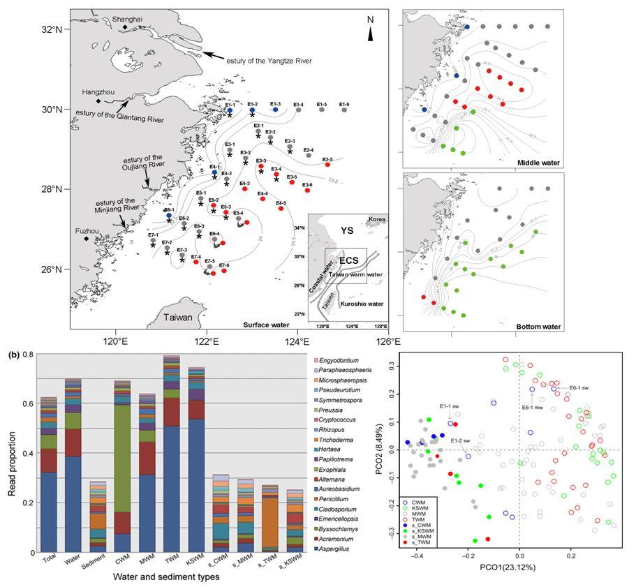 【Molecular Ecology】海流影响东中国海海域真菌多样性