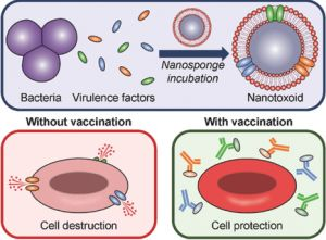 "Advanced Materials:""纳米海绵""俘获多种细菌毒素用作抗毒力疫苗对抗超级细菌感染"