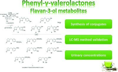 定量尿液中绿茶代谢物的新方法