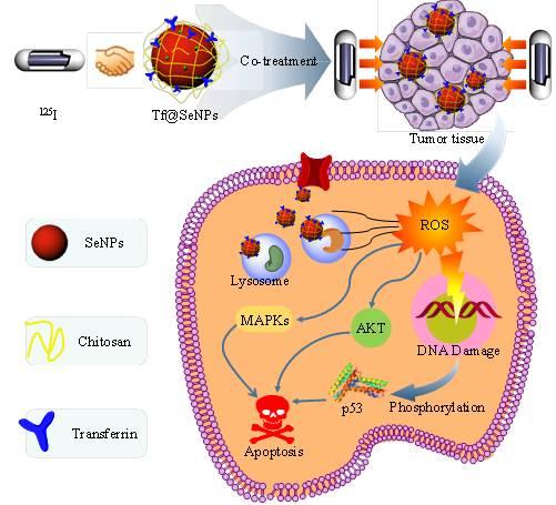 癌细胞靶向的硒纳米颗粒