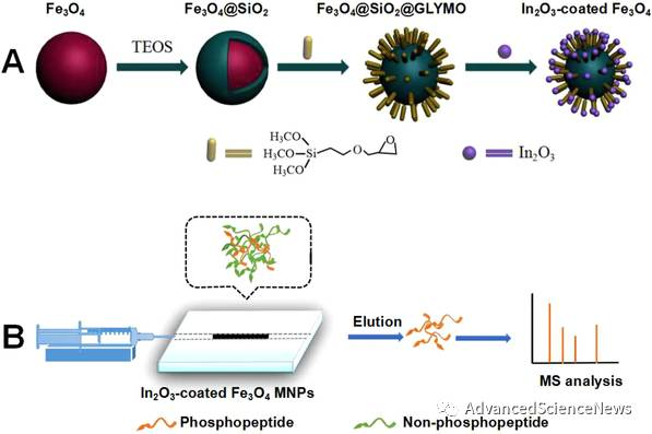 用于蛋白磷酸组学分析的磁性纳米颗粒