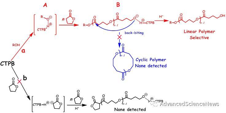 环三磷腈碱催化无环张力γ-丁内酯选择性开环聚合