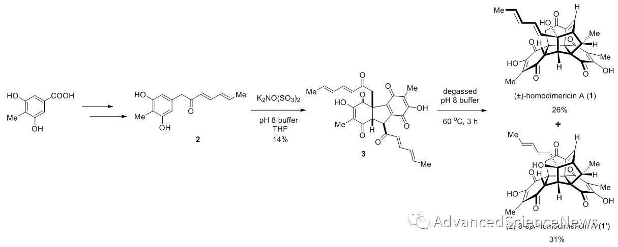 (±)-Homodimericin A的仿生全合成