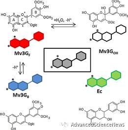 高分辨质谱研究红酒中多酚类组分