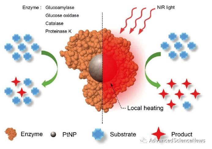 华东师范大学学者实现近红外光对酶活的动态调控
