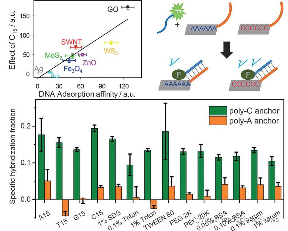 DNA修饰无机纳米材料新策略:通过聚胞苷酸(poly-C)进行非共价链接
