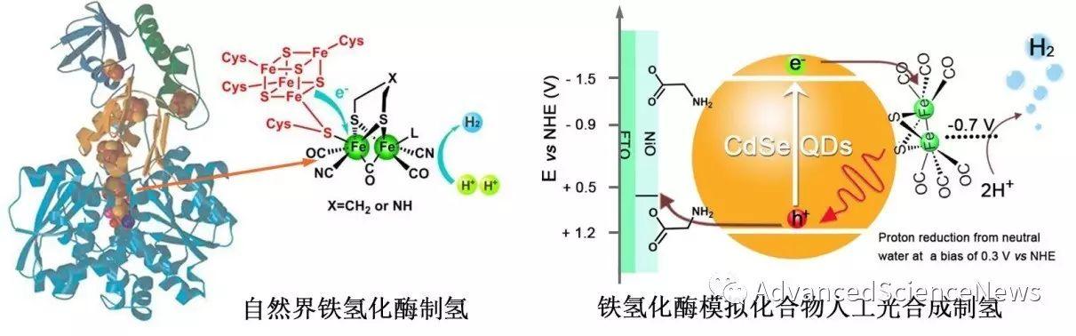 铁氢化酶模拟化合物在低偏压下实现人工光合成制氢