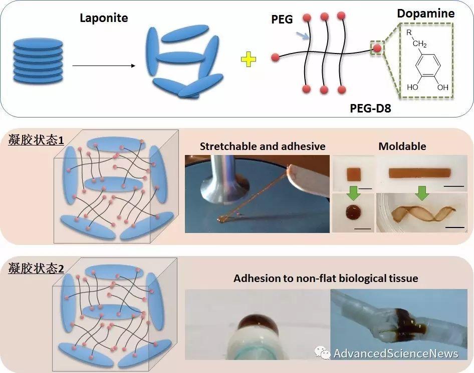 一种可二次成型的贻贝仿生纳米复合水凝胶及其作为生物组织粘合剂的应用