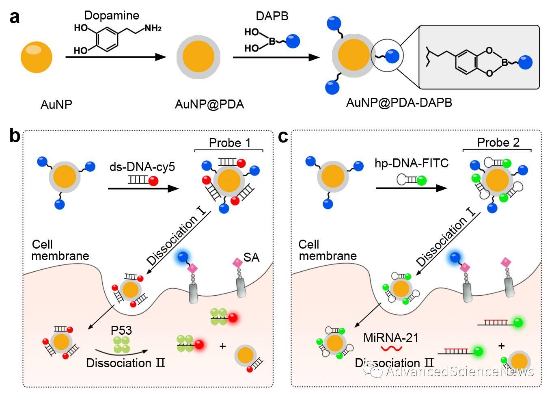 肿瘤分子标志物单细胞逐层成像新进展