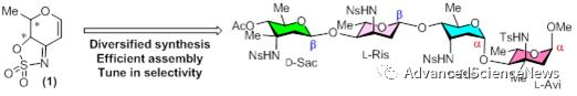 3-氨基脱氧糖的多样性合成及其糖苷键的构建