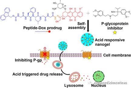 利用纳米凝胶同步实现药物可控释放与抑制肿瘤耐药性