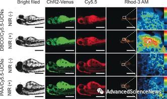 利用近红外光远程精准调控靶细胞离子通道的新策略