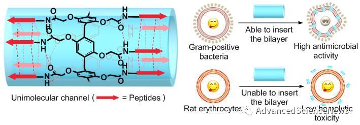 克服细菌耐药性抗生素开发的新策略:特异性的在细菌细胞膜上钻孔