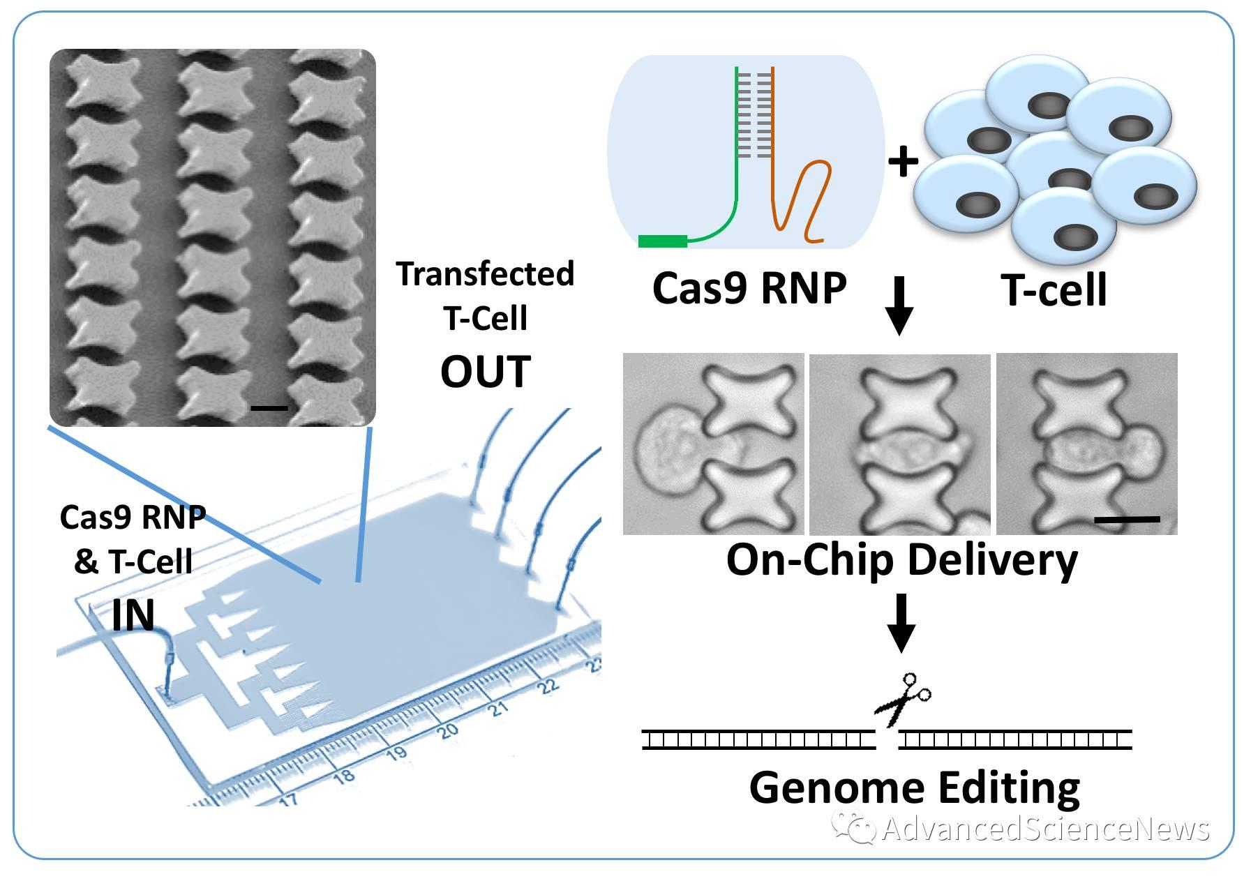 CRISPR编辑T细胞,微流控芯片助力免疫治疗