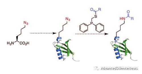 蛋白质中酰基化赖氨酸特异性引入的新策略:非天然氨基酸引入与生物正交反应相结合