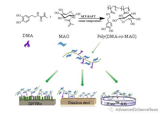 糖与多巴胺的融合:可控聚合及表面修饰