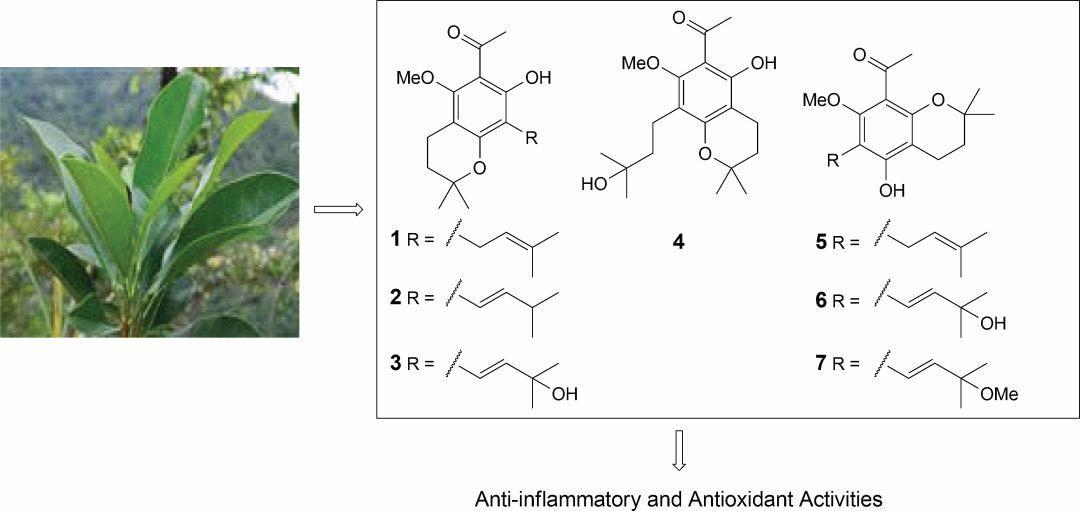 贡甲中苯乙酮类化学成分及其抗炎和抗氧化活性研究