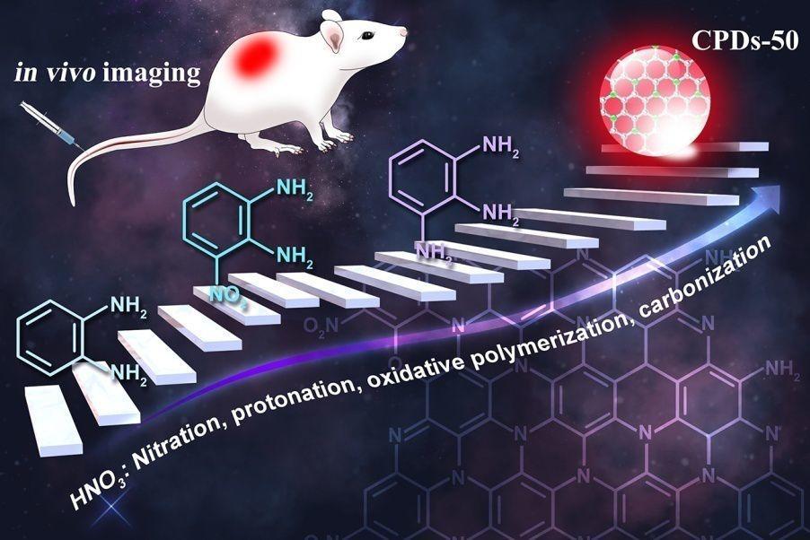 Small:活体成像──基于绿色简易法制备的高效红光碳化聚合物点