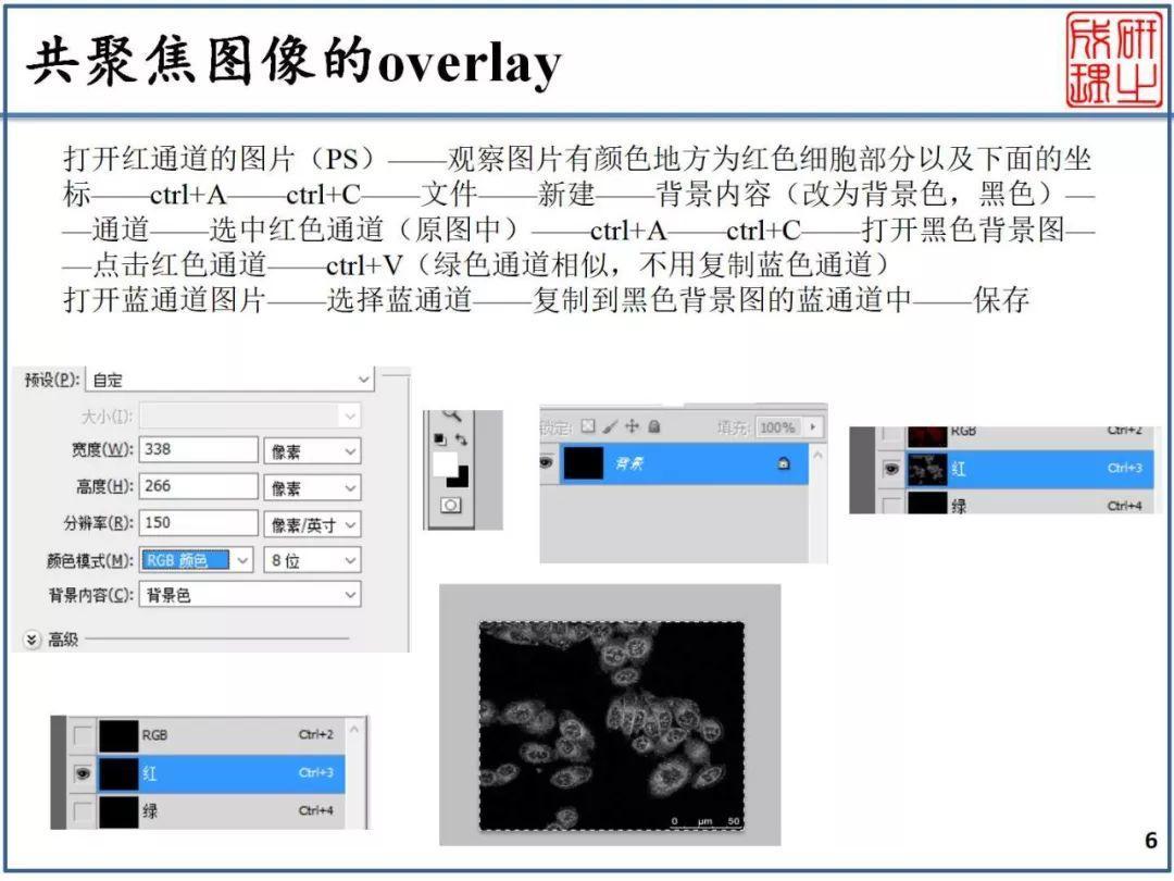 【干货】共聚焦图像的overlay-003