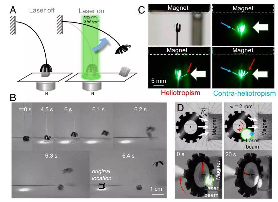 PNAS封面: 实验室中的向日葵—光驱动柔性磁性材料