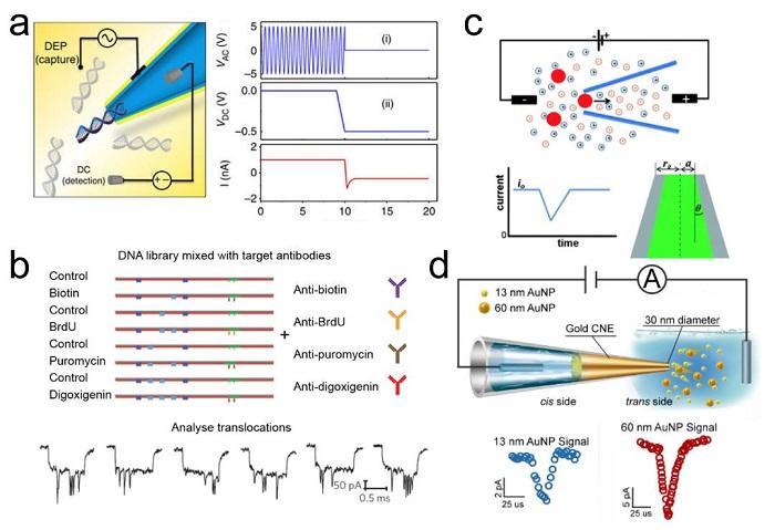 华东理工应佚伦Angewandte有限域效应纳米孔道综述丨单分子、单颗粒及单细胞分析传感