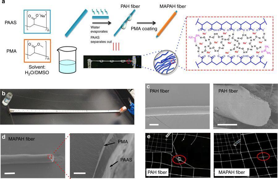 仿蜘蛛丝结构的高性能导电水凝胶纤维