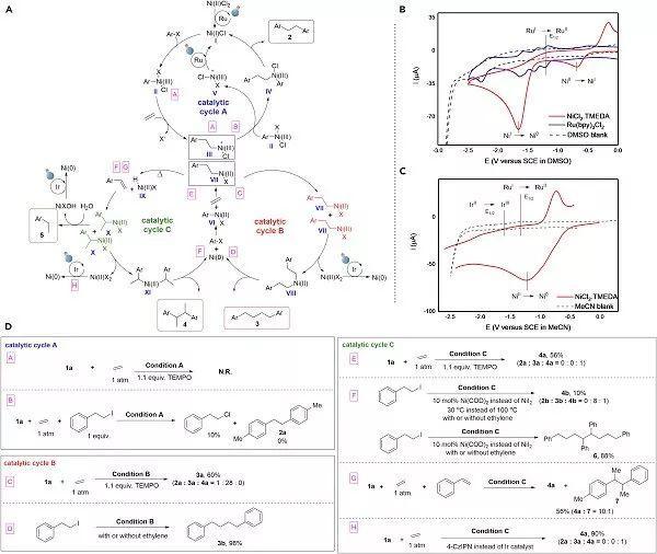 光氧化还原-催化-调节,镍催化的乙烯发散双功能化 清新电源:景少很白