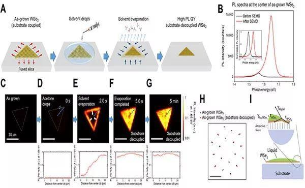 Science Advances:勇创60%最高纪录!CVD制备单层WSe2材料实现高光致发光量子产率!