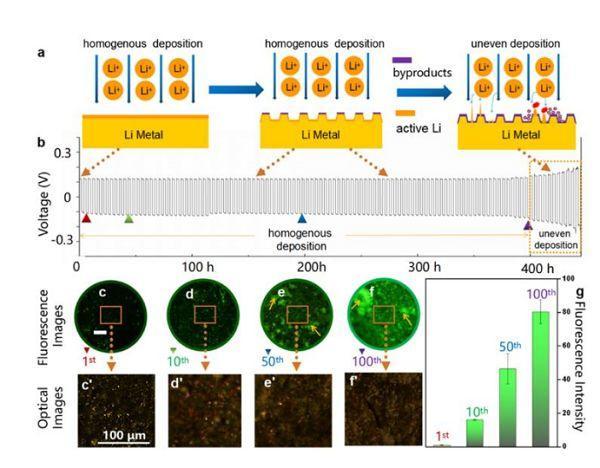 青岛能源所&中国海洋Angew:锂金属负极活性锂分布的荧光探测