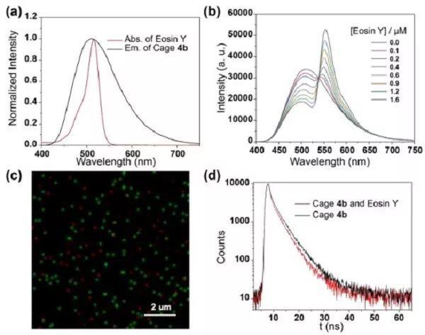 西交大Angew. Chem.:含铂(II)笼式水相光捕获系统用于光催化交叉偶联析氢反应
