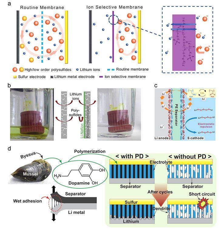 Energy Storage Materials期刊及其高被引文章介绍