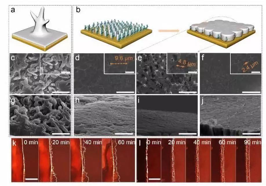 Angew:控制锂在形核阶段正常生长,实现无枝晶的锂金属负极